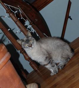 photo of cat by maureen carroll